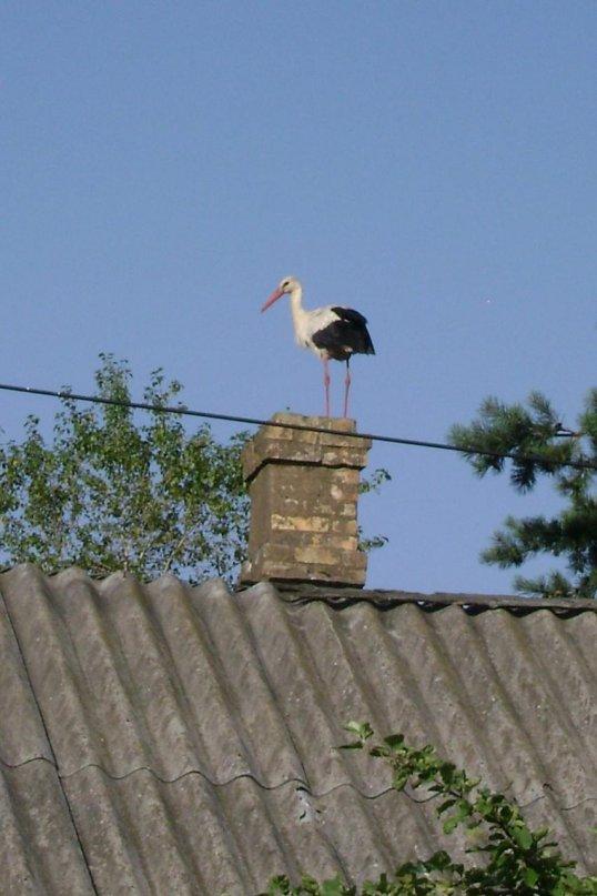 аист на крыше слушать плюс