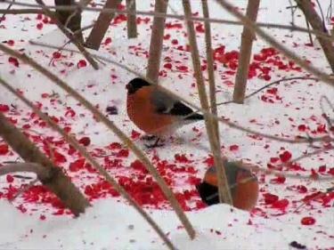 трофим за окошком снегири слушать