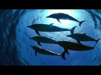 Dolphins & Whale sounds, 11 hours. Friendly Dolphins & Whales singing - Nature sounds for relaxation